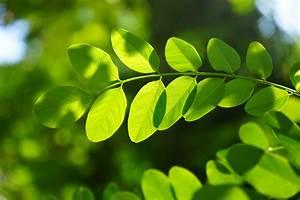 Free Images : nature, grass, branch, sunlight, flower ...