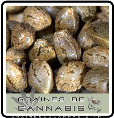 quoi pas faire pour germer ses graines de cannabis