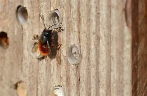 Nichoir A Insecte : les nichoirs et abris insectes ~ Premium-room.com Idées de Décoration
