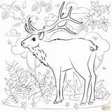 Coloring Elk Printable sketch template