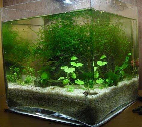 premier nano d eau douce 224 crevette mon premier aquarium