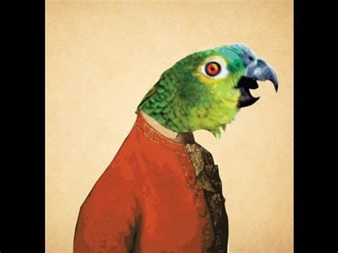 Parrot Sings Let Bodies Hit The Floor by Escuchar Musica Gratis Ccoli Musica
