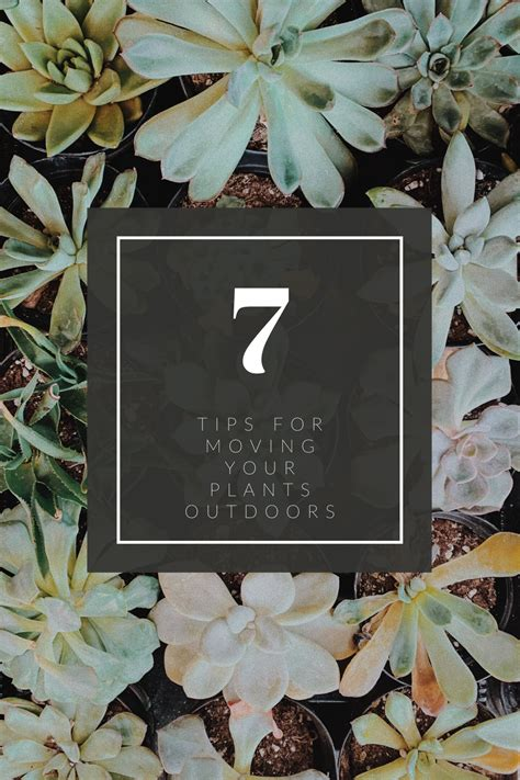 7 Tips for Moving Your Plants Outdoors | Mills Florist in ...