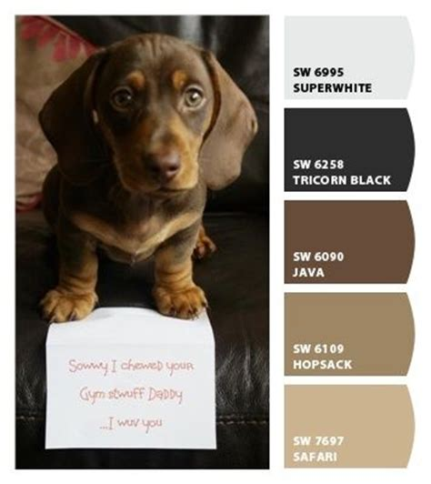 colors brown paint colors and brown paint on pinterest