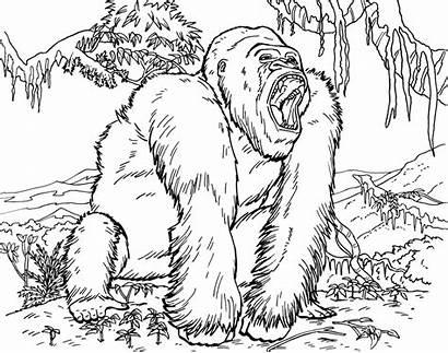 Gorilla Coloring Pages Printable Grodd Orangutan Animals