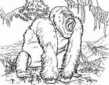Gorilla Coloring Printable Orangutan Animal Animals Lego Colouring Sheets Clipart Adult Diposting Oleh Admin Di Library Thevillageanthology Coloringhome sketch template