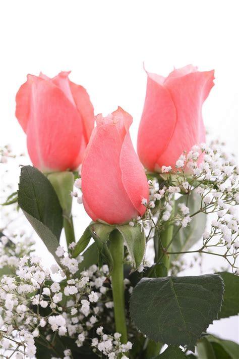 gambar bunga mawar  cantik cantik wallpaper