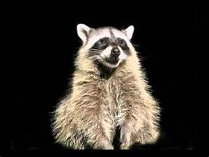 Funny Mother's Day Song (Rosco the Raccoon) - YouTube