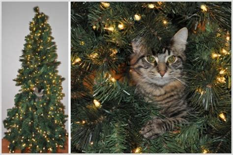 cats  christmas trees  pics curious funny