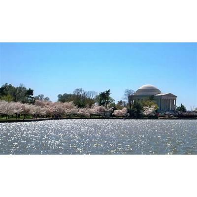 National Cherry Blossom Festival - Wikipedia