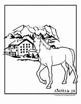 Ranch Coloring Horse Template sketch template