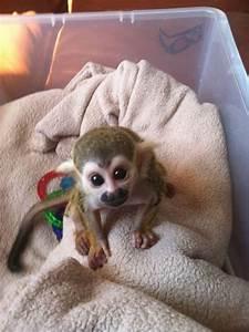 meet Bobo the baby spider monkey   Baby animals-soo cute ...