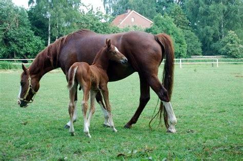Pferde Als Hintergrundbild Für Desktop Handy Oder Homepage