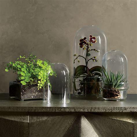 Glass Cloche Terrariums   So That's Cool