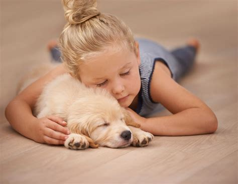 what is the best flooring for pets best flooring for pets best floor for dogs