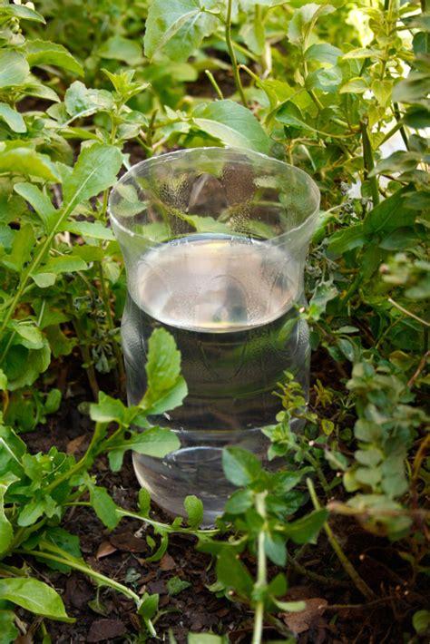 diy drip irrigation system  plastic bottles