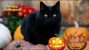 Free Screensaver For Halloween Halloweenblackcat