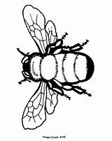 Coloring Bee Pages Colouring Sheets Printable Popular sketch template