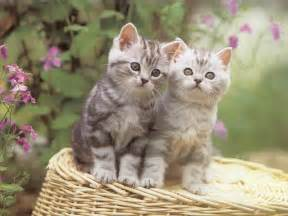 silly cat wallpapers hd wallpapers cats and kittens