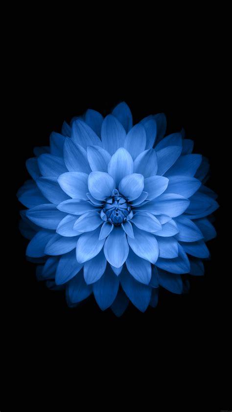 ac wallpaper apple blue lotus iphone  ios flower