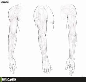 Human Arm Reference Sketch Coloring Page