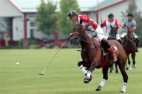 viewed polo wallpapers  wallpapers