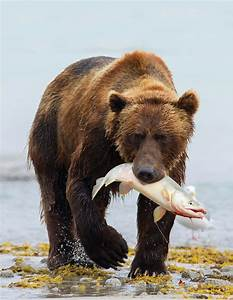 Encounters of the Grizzly Kind | Magazine Articles | WWF  Grizzly