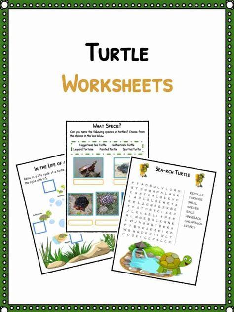 turtle facts worksheets habitatspecies information
