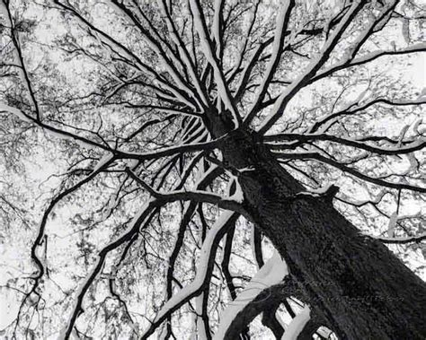 Abstract Black And White Photography Nature by Tree Photo Black White Abstract Print Top 8x10