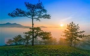 Wallpaper, Dawn, Nature, Scenery, Morning, Mountains, Pine