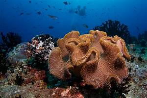 Top 10 Most Beautiful Coral Reefs | www.pixshark.com ...