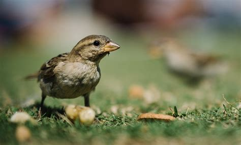 how to keep birds from eating grass seed without losing