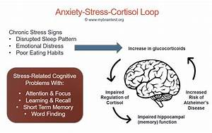Chronic Anxiety  Stress And Memory Loss