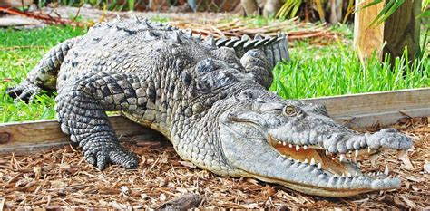 Everglades Airboat Tours Pembroke Pines by Sawgrass Recreation Park Fort Lauderdale Fl 33327 954