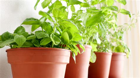 How To Grow Herbs When To Water, How Much Sunlight, More
