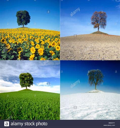 Im Herbst Und Winter by Die Vier Jahreszeiten Kastanien Baum In Einer Landschaft