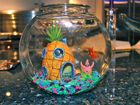 spongebob fish tank lol it s not pictured here but we do a spongebob in our tank