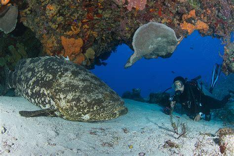 cozumel underwater coral reefs reef mesoamerican barrier system largest ocean second