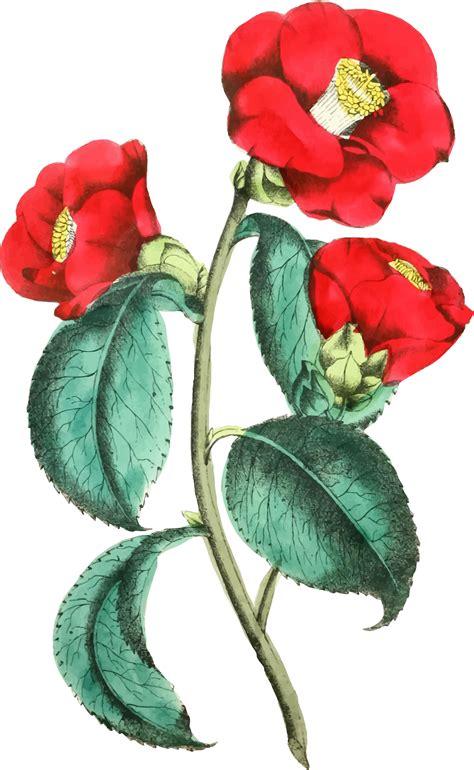 clipart flower illustration clipart flower illustration
