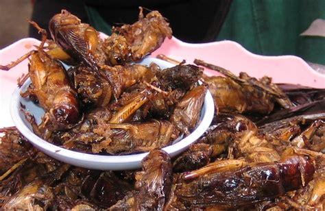 cuisine insectes comestibles le grillon quel sont les particularités de cet