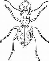 Insect Line Drawing Bug Outline Spider Coloring Clip Potato Beetle Transparent Vector Template Clipart Vectors Related Staghorn Pixabay Templates 1001freedownloads sketch template