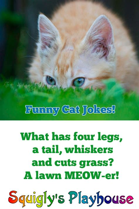 cat jokes for cat pictures for coloring pictures