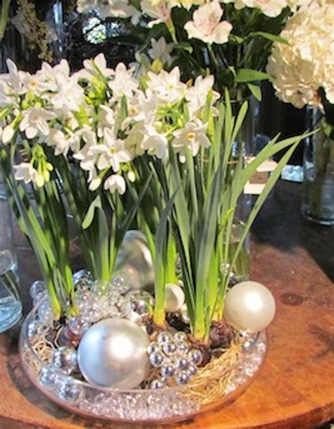 how to paperwhite narcissus for indoor blooms