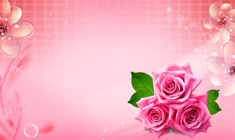 Pink Roses Background Beautiful Pink Roses Background Wedding Cosmetic