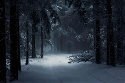 Dark Winter Forest Android Wallpapers Landscape Desktop