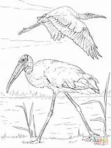 Coloring Pages Wood Storks Printable Stork Drawing Paper Realistic Animals Through sketch template