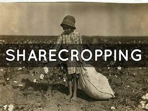 Sharecropping By Aaron G