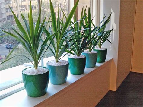 Best Indoor Window Sill Plants by What Colour Would Look Best In Your Office Visit Www