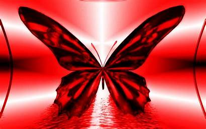 Butterfly Abstract Cool Wallpapers Monotone Writing Pxu
