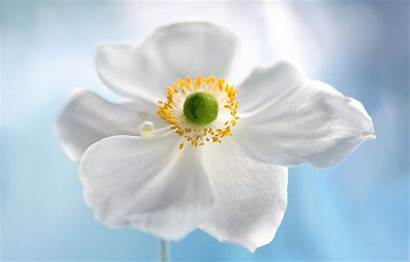 Petals Nature Flower Telegram вконтакте